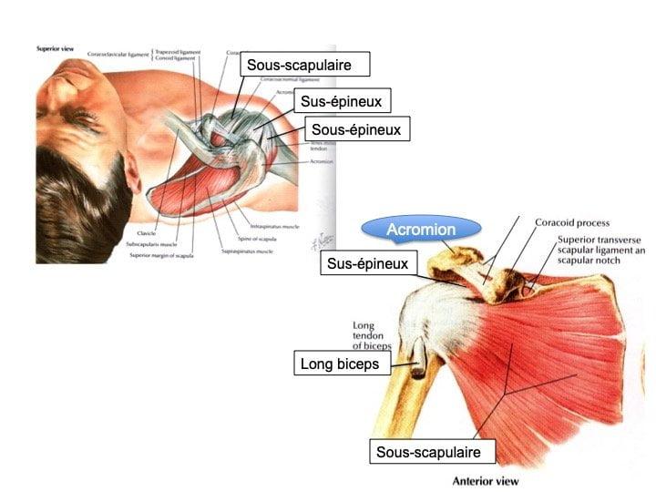 Anatomie Epaule